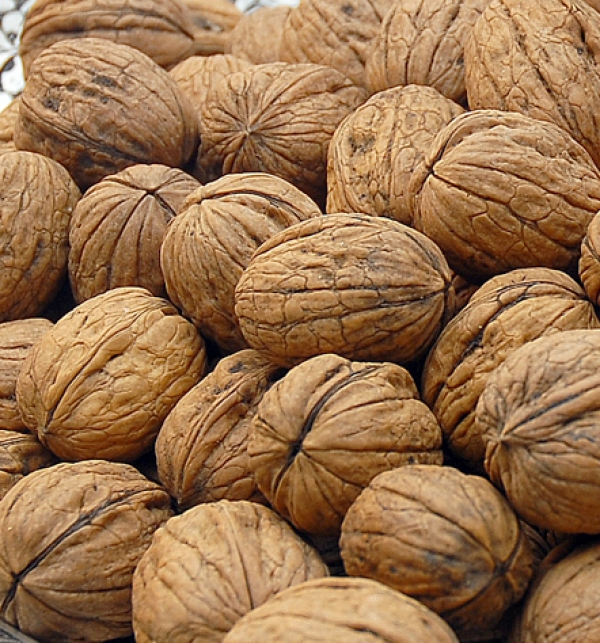 WALNUT: BRAIN AND HEARTH HEALTHY FOOD