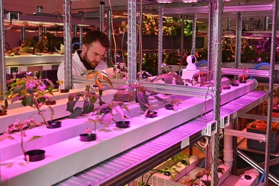 First runner-up; 'Smart Garden'